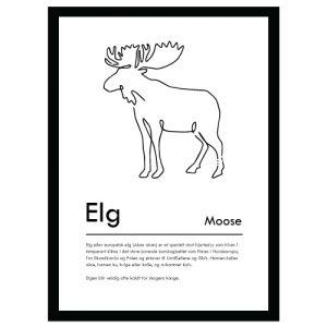 Elg plakat - Plakater med dyr og naturmotiv - Ztili.no